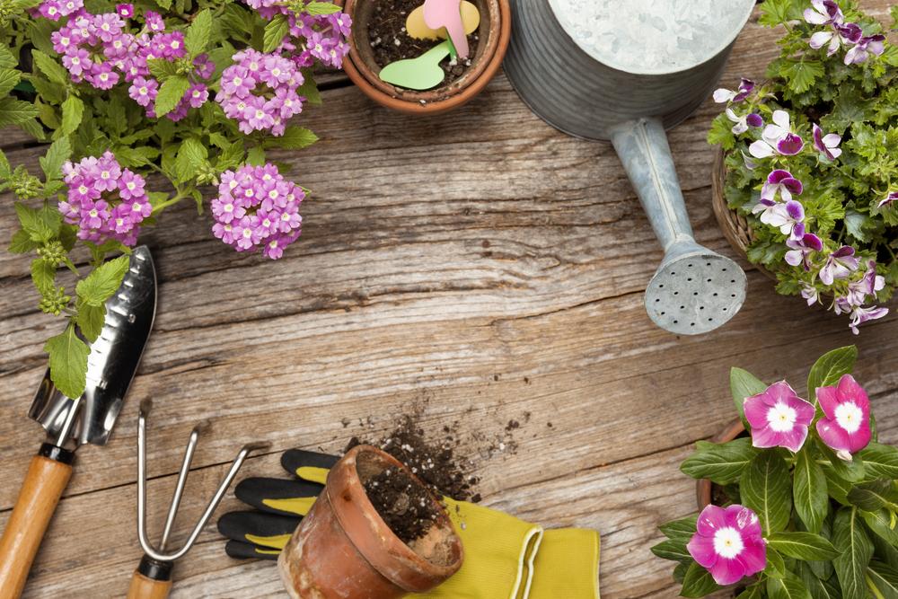 fare orto per mangiare più sano