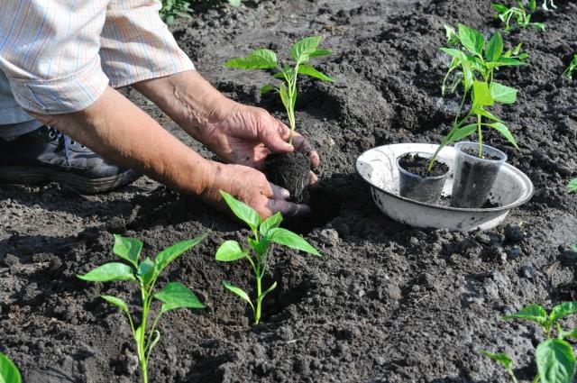 concimi organici, come prepararli in casa