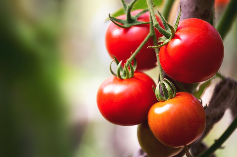 Ritenzione idrica - Pomodori