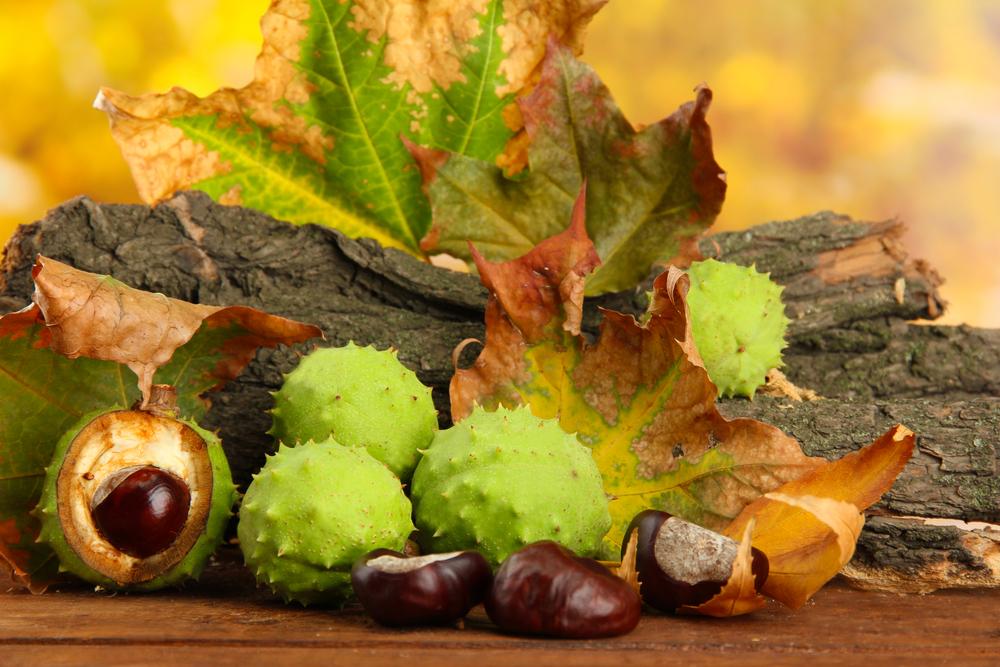 Castagne. La frutta secca ti ricarica di energia