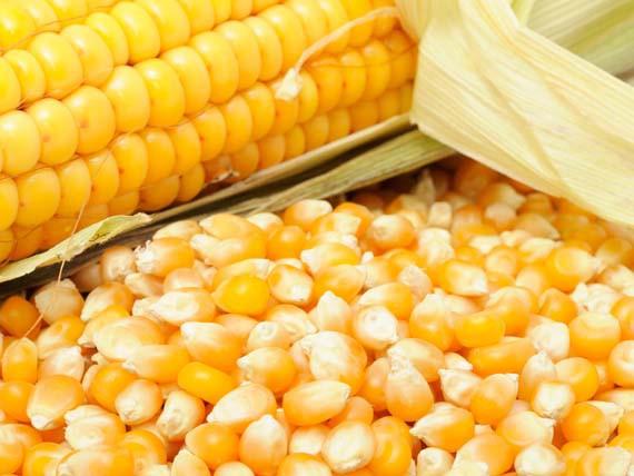Mais. I cereali: più energia con leggerezza