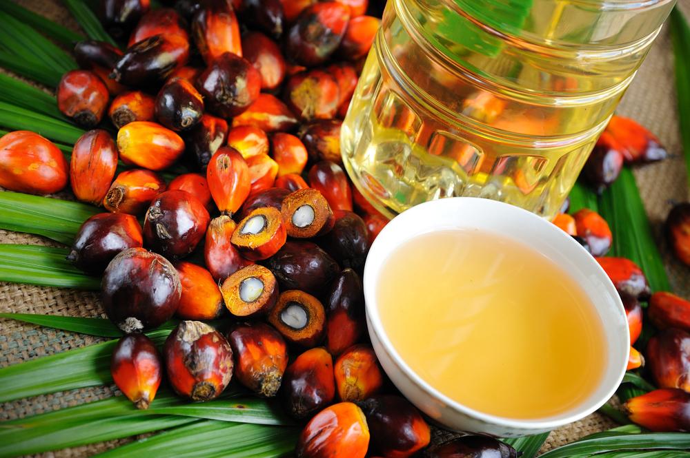 olio di palma fa male alla salute
