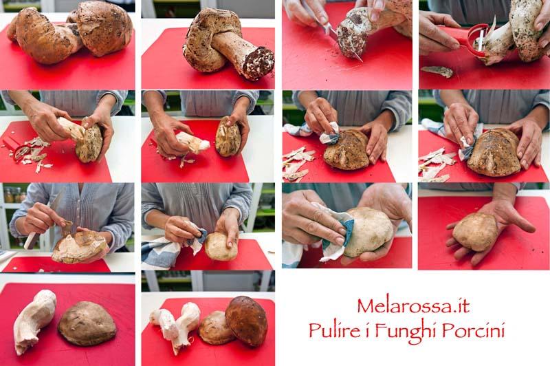 come pulire i funghi porcini
