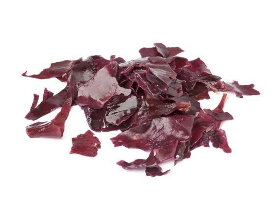 Dulse. Alghe, alimenti ricchi di salute