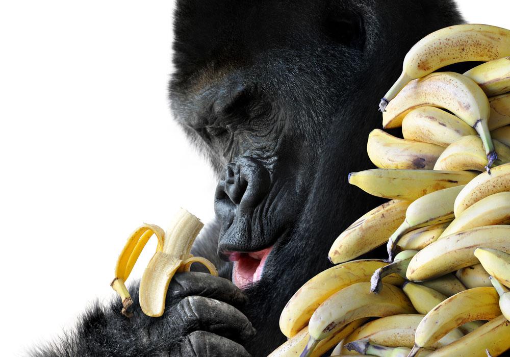 consigli per dimagrire: fai credere al tuo cervello che hai già mangiato