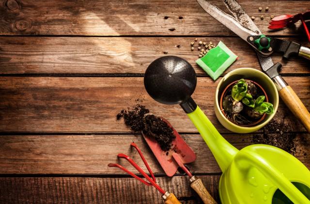 come coltivare orto a casa