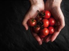Come coltivare pomodori in casa