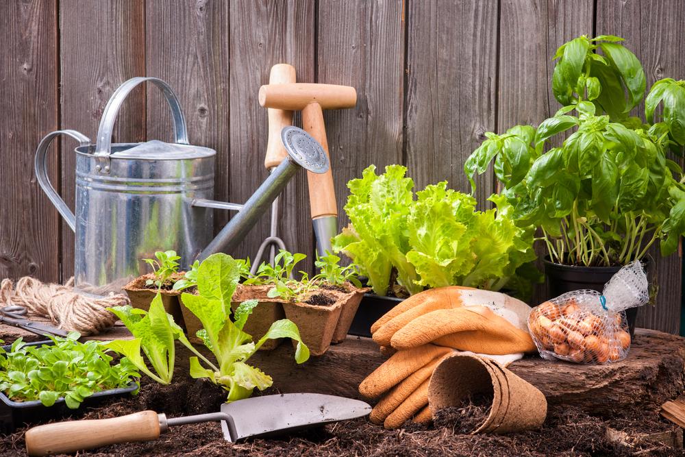 come fare un orto in casa