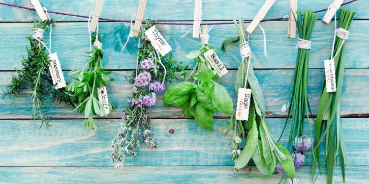 come trapiantare le erbe aromatiche nel proprio balcone