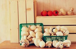ricette fungo antibiotico naturale