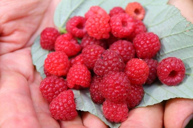 frutta di stagione: settembre