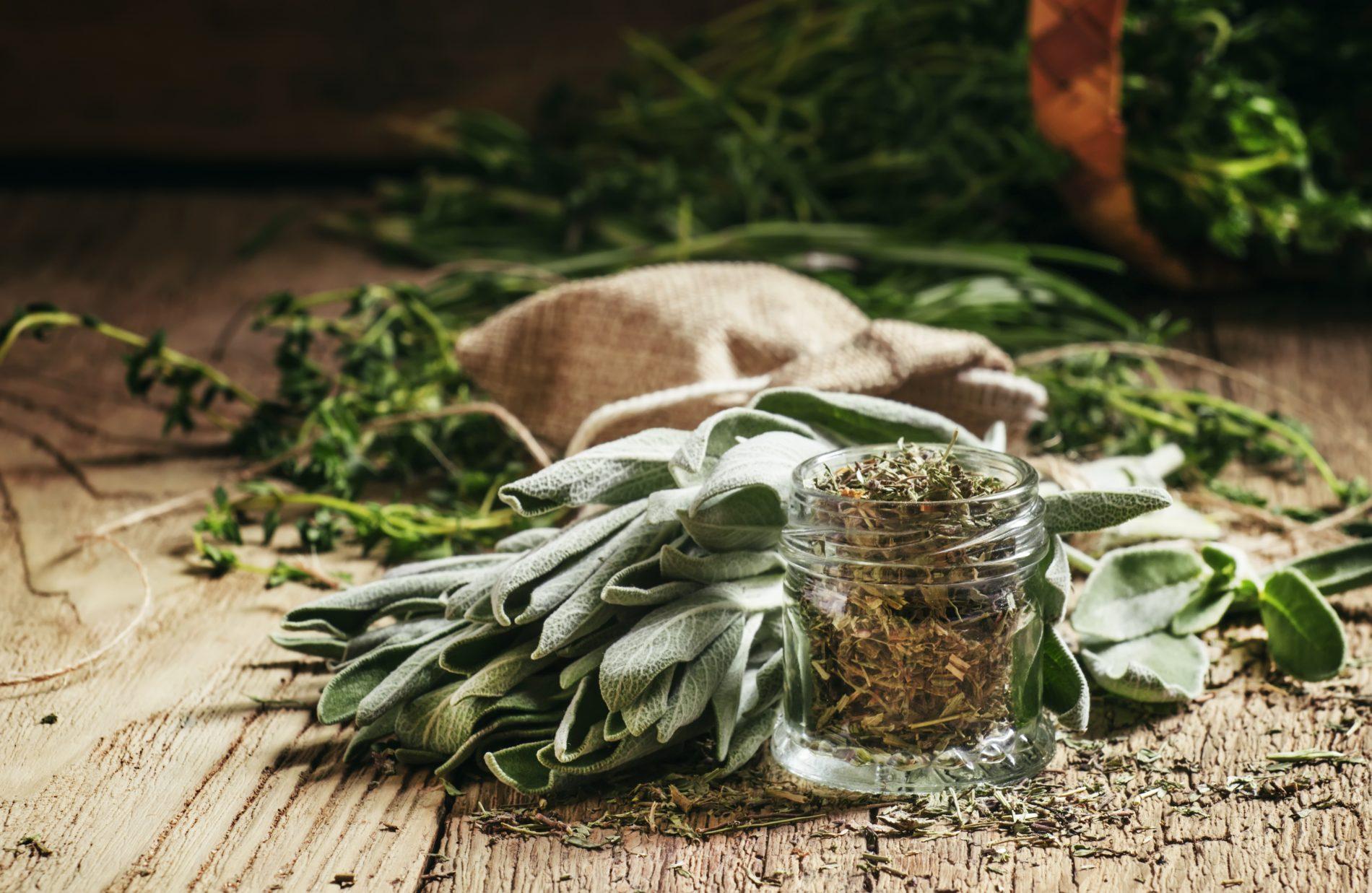 salvia: cos'è, benefici, proprietà e ricette di bellezza e cucina