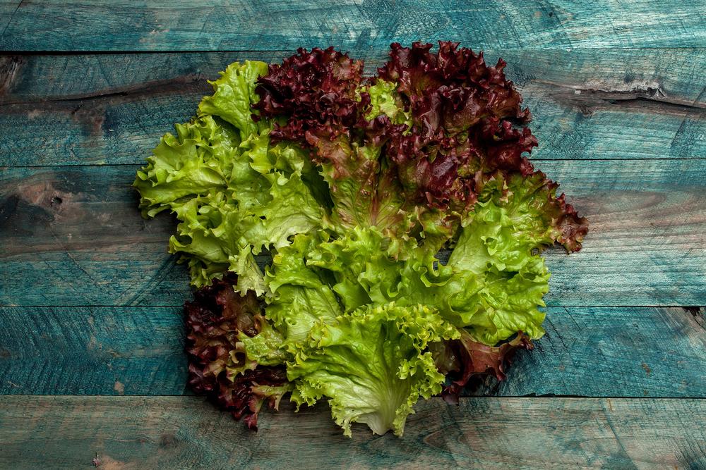 insalata lollo varietà