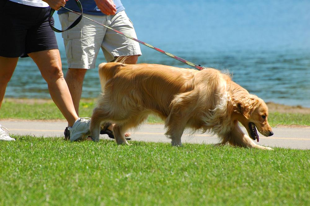 dimagrire camminando, porta con te il cane per bruciare più calorie