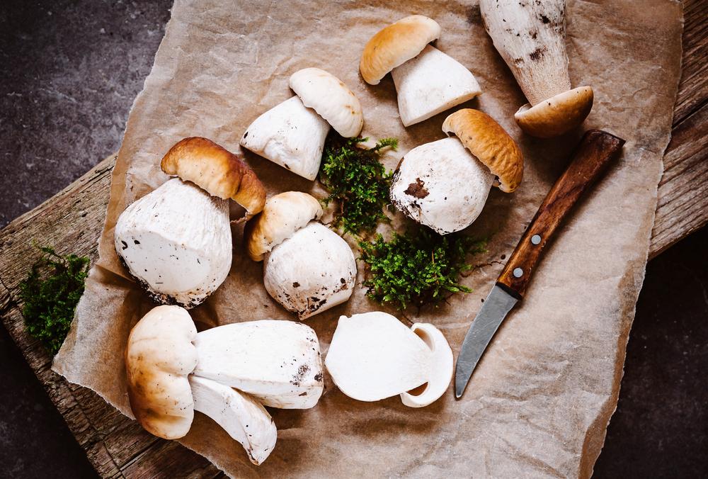 funghi porcini, come raccoglierli