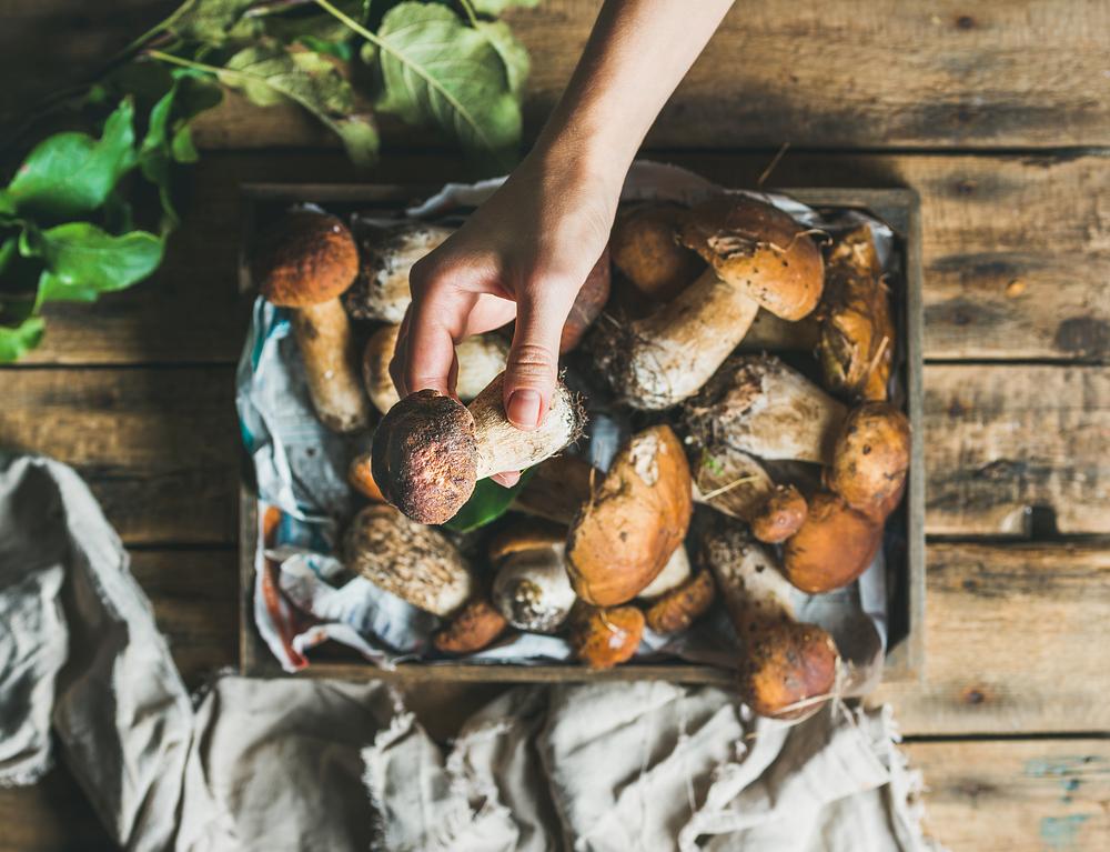 funghi, la raccolta in sicurezza