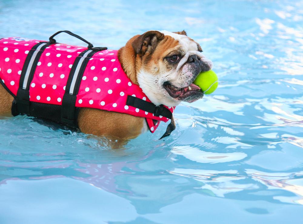 attività fisica per far dimagrire il tuo cane in sovrappeso