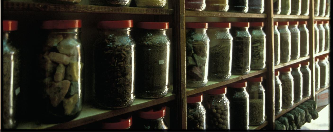 piante curative dal Marocco