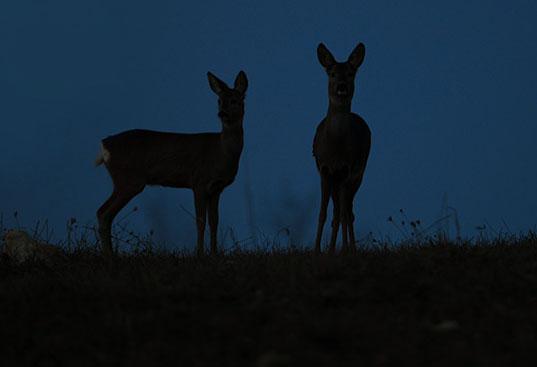Vacanze nella natura: safari notturno Majambiente
