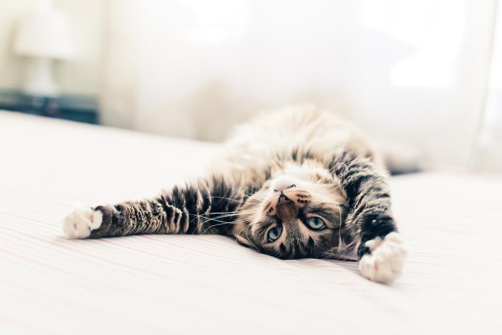 dormire bene: non far sport prima di andare a letto