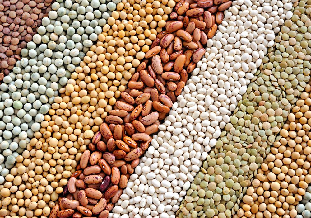 Nella dieta senza glutine il consumo di legumi può rivelarsi molto utile per eventuali carenze da parte dei celiaci.