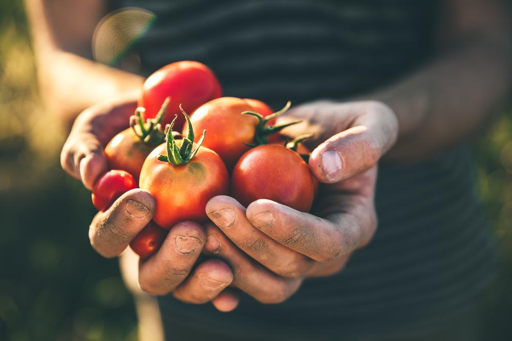 cibi per non ingrassare questo estate: i pomodori