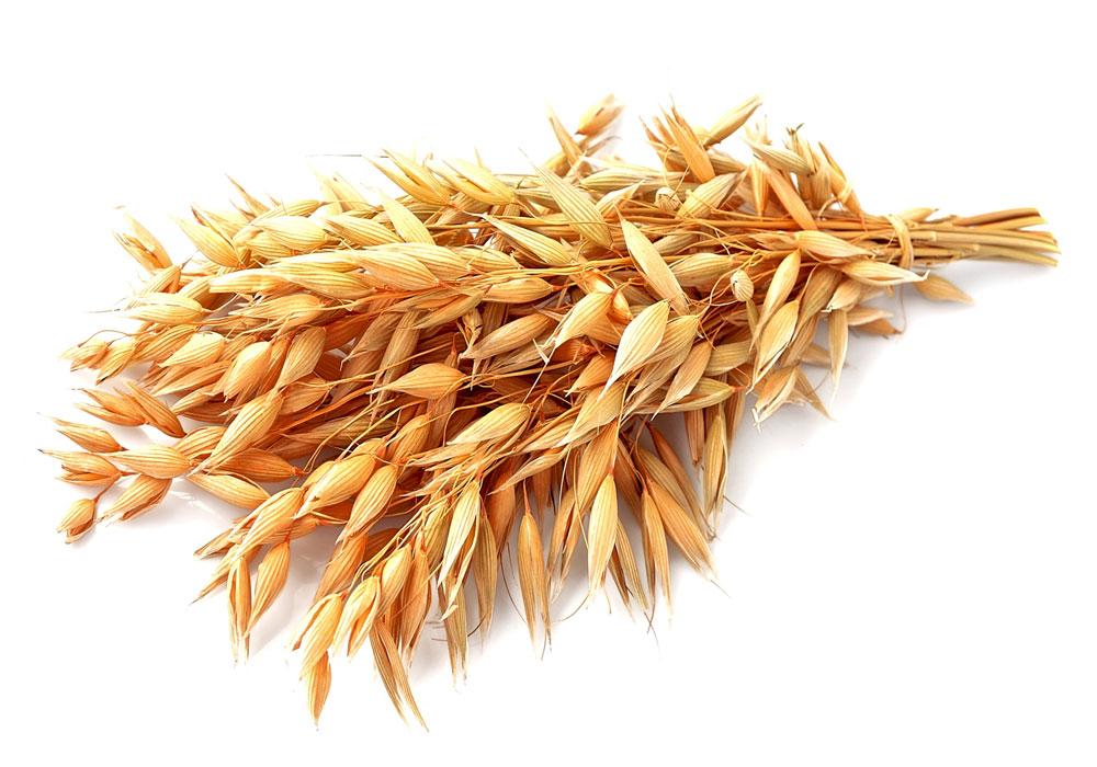 Avena senza glutine: è permessa permessa nella dieta dei celiaci?