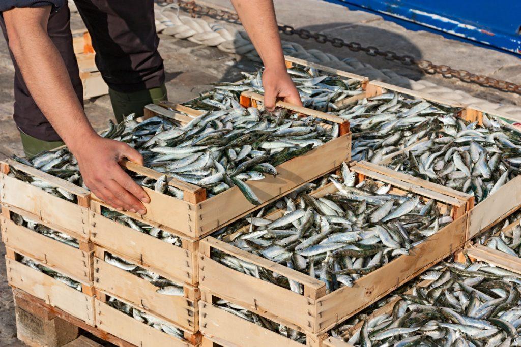 pesce, come comprarlo