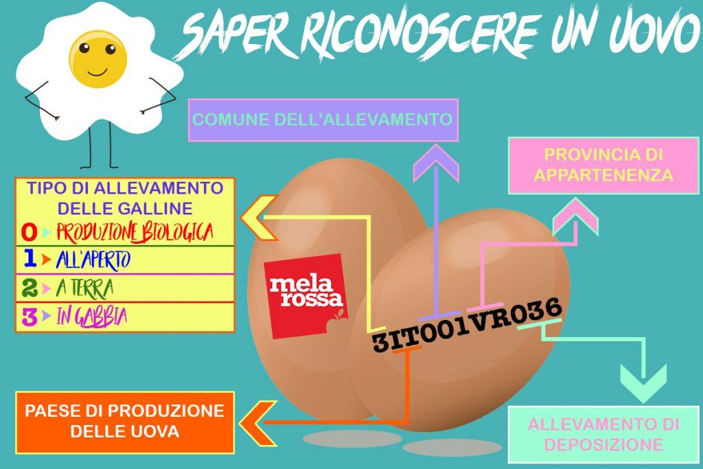 Uova contaminate: impara a leggere l'etichetta