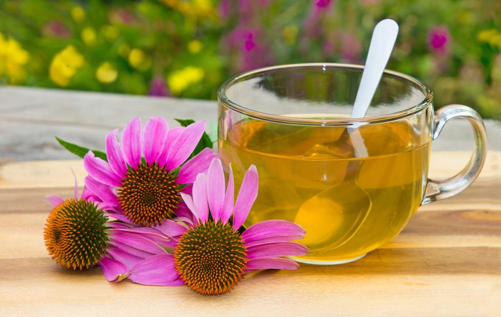 rimedi contro la stanchezza : rinforzare sistema immunitario con echinacea