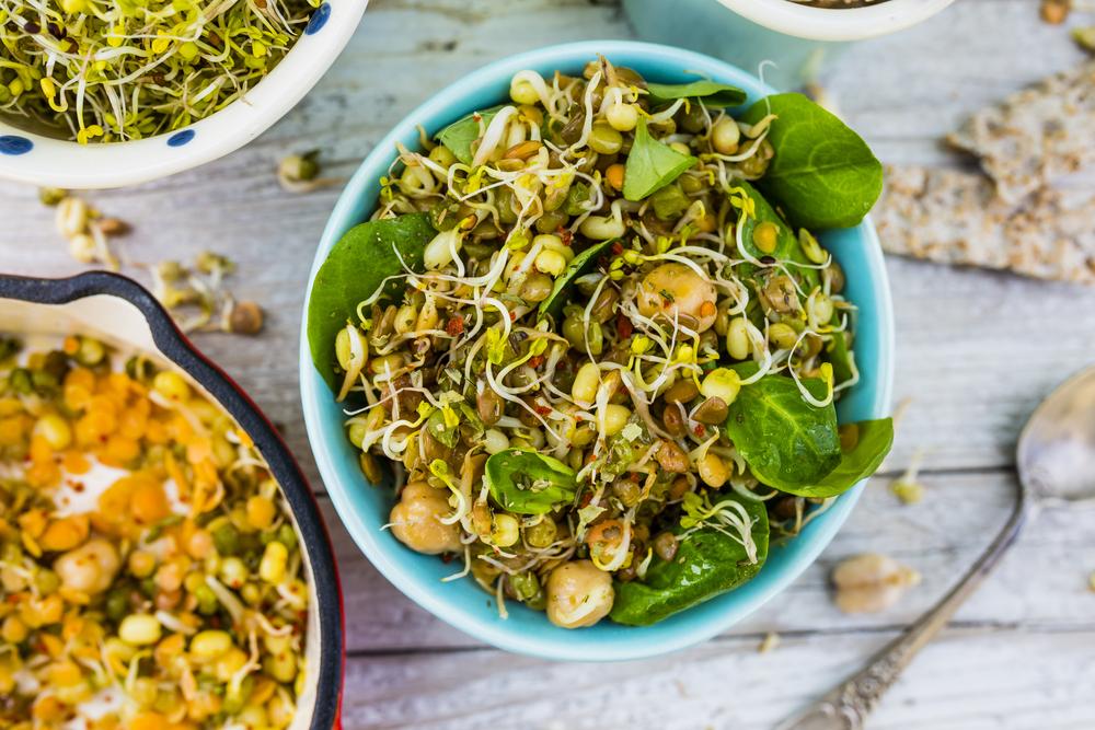 germogli benefici nutrizionali ricette
