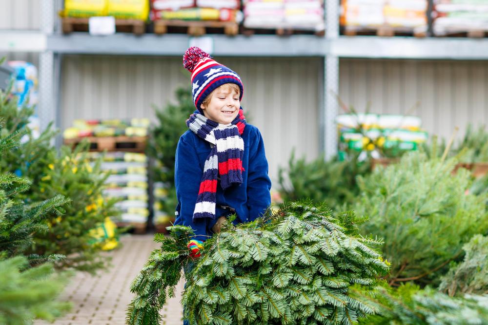 albero di Natale: consigli per acquisto