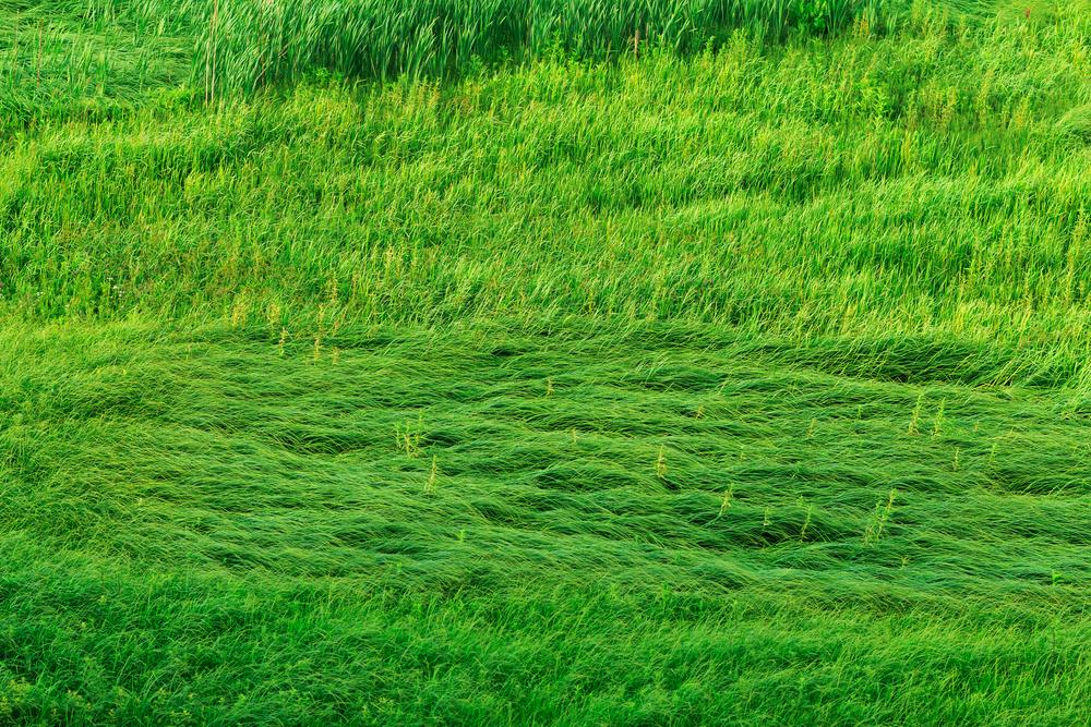 Gli odori contro lo stress: l'erba tagliata