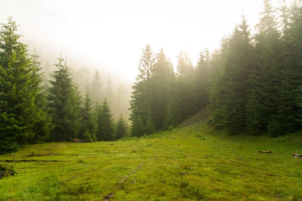 I 7 odori anti stress: il pino