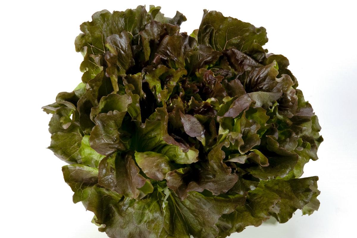 tipi di insalata, canasta