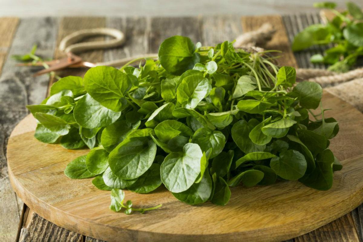 tipi di insalata, crescione