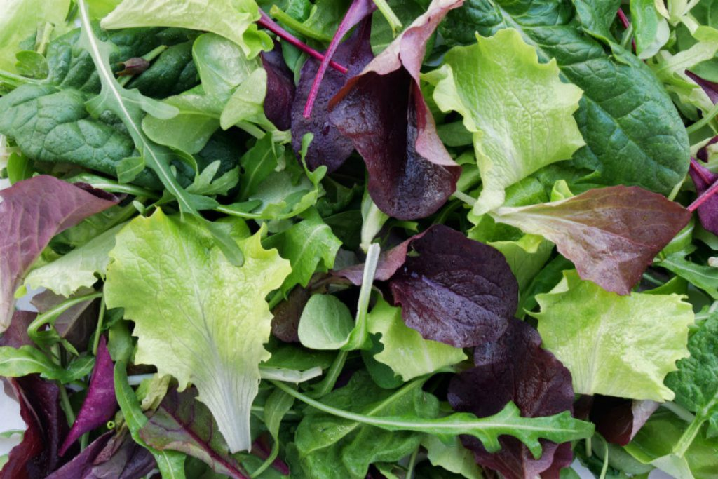 tipi di insalate per dimagrire