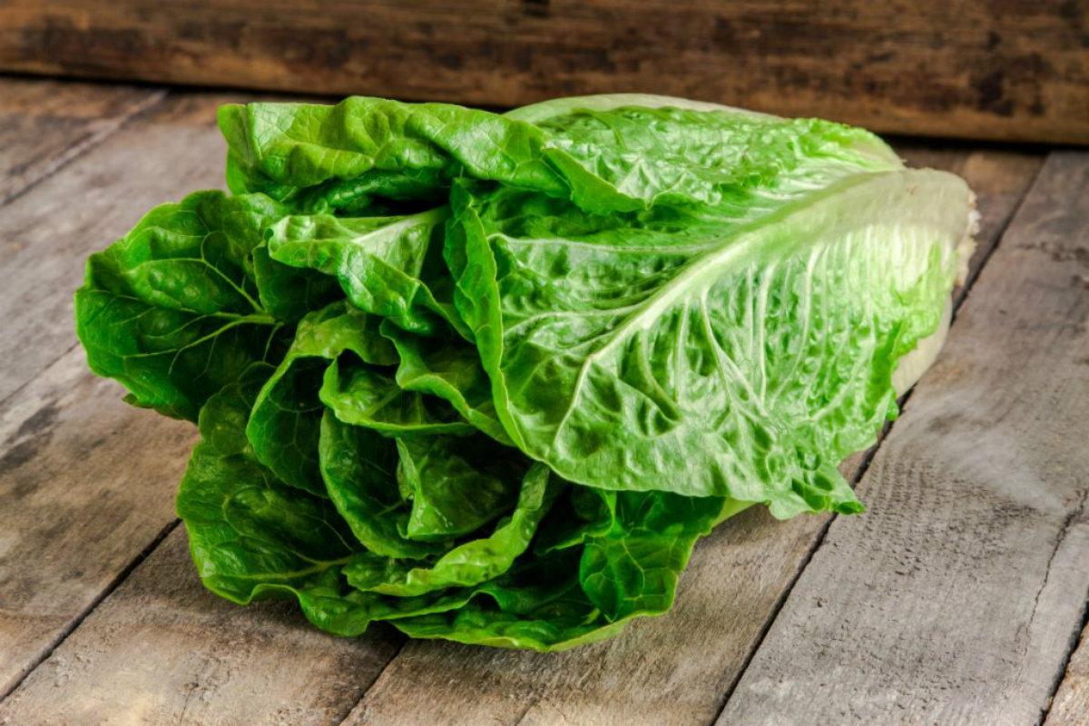 tipi di insalata, insalata romana