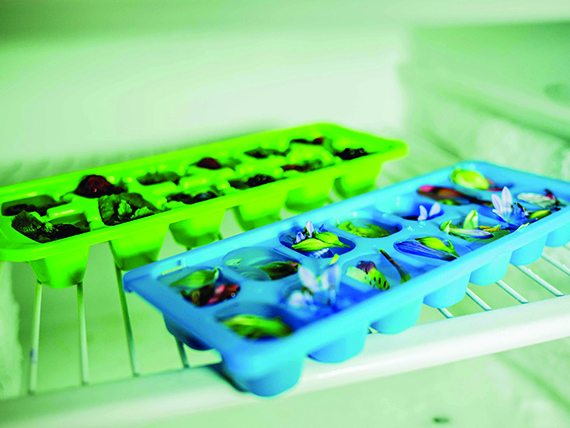 cubetti di ghiaccio, come raffreddarli in freezer