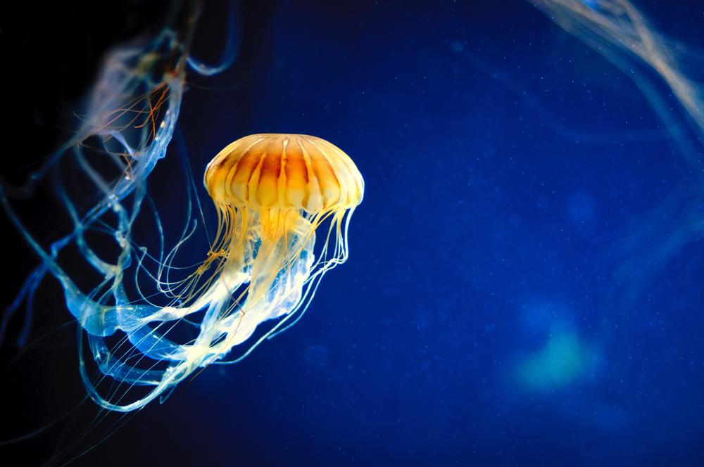 imprevisti da spiaggia meduse