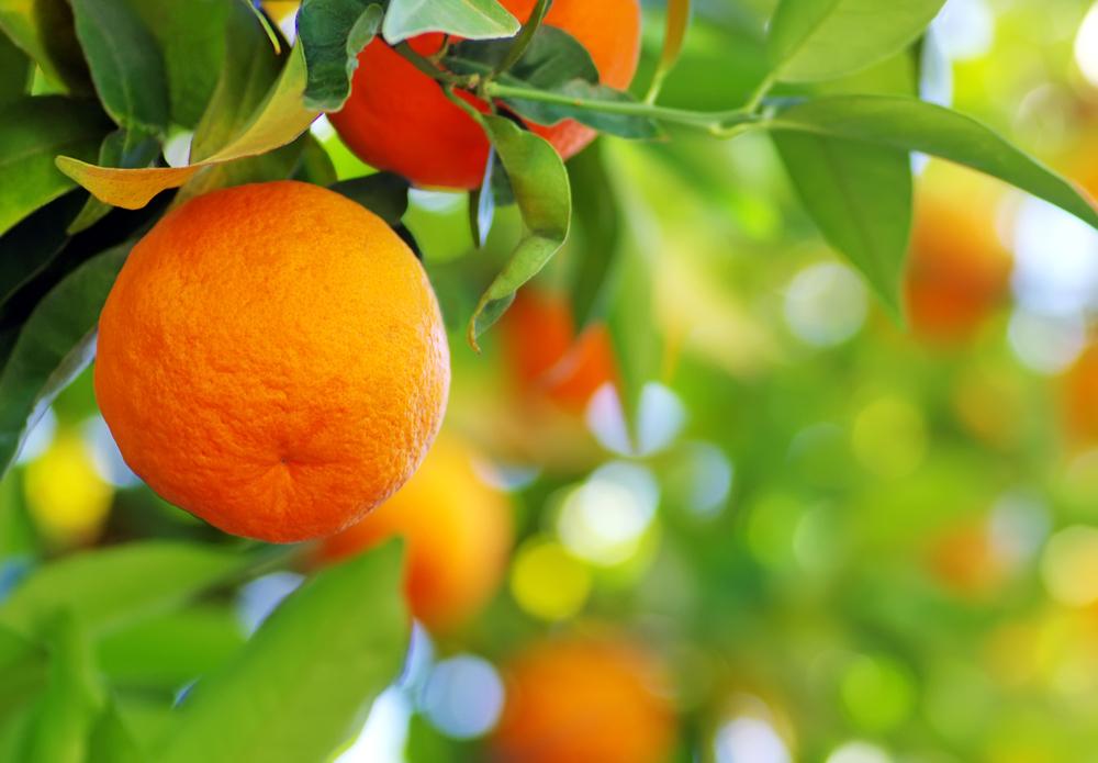 arancia frutto