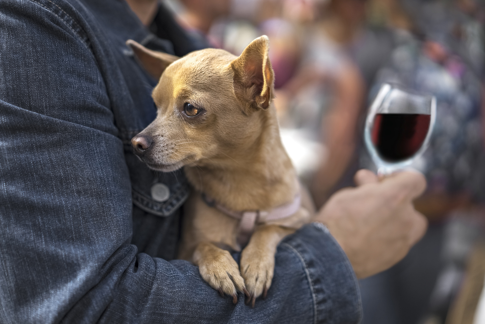 dieta e vino vanno d'accordo?