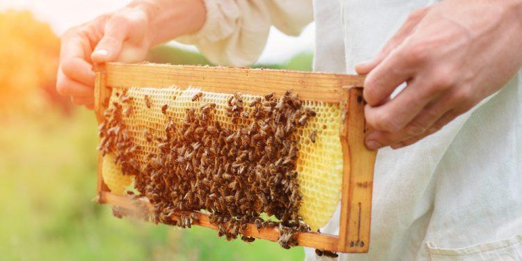 miele contaminato