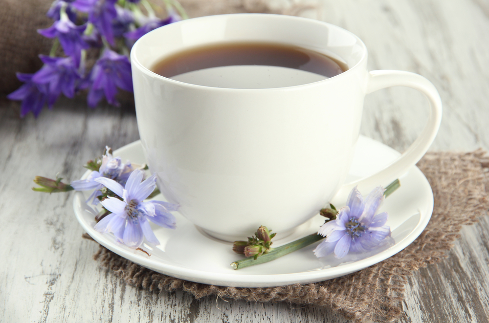 alternative al caffè, cicoria