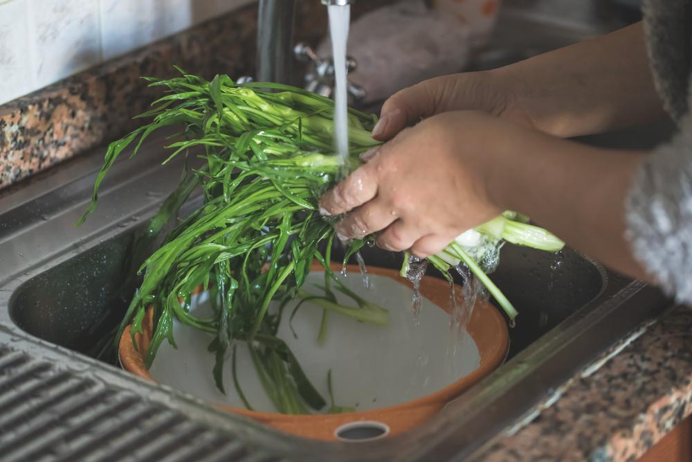 cicoria come pulire e cuocere