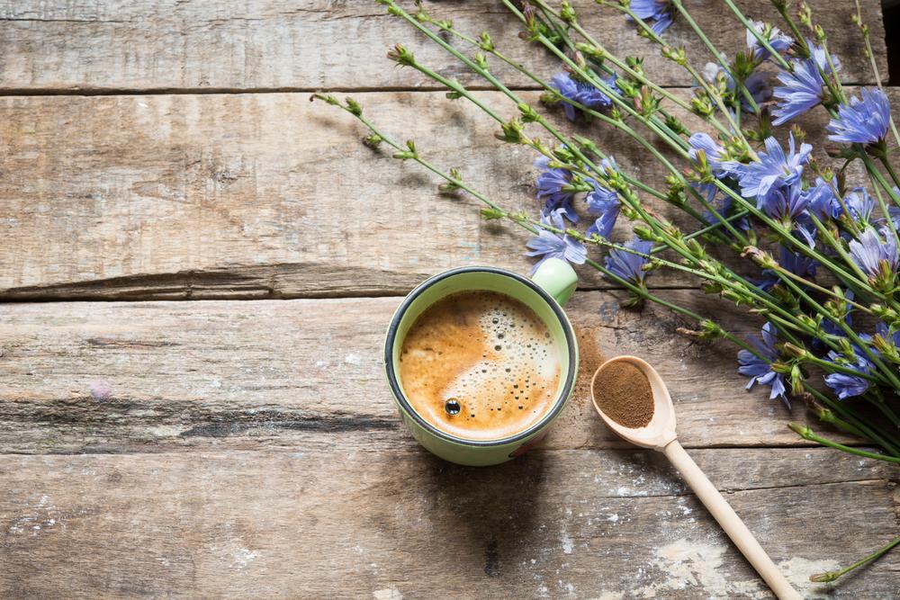 cicoria usi alternativi caffè
