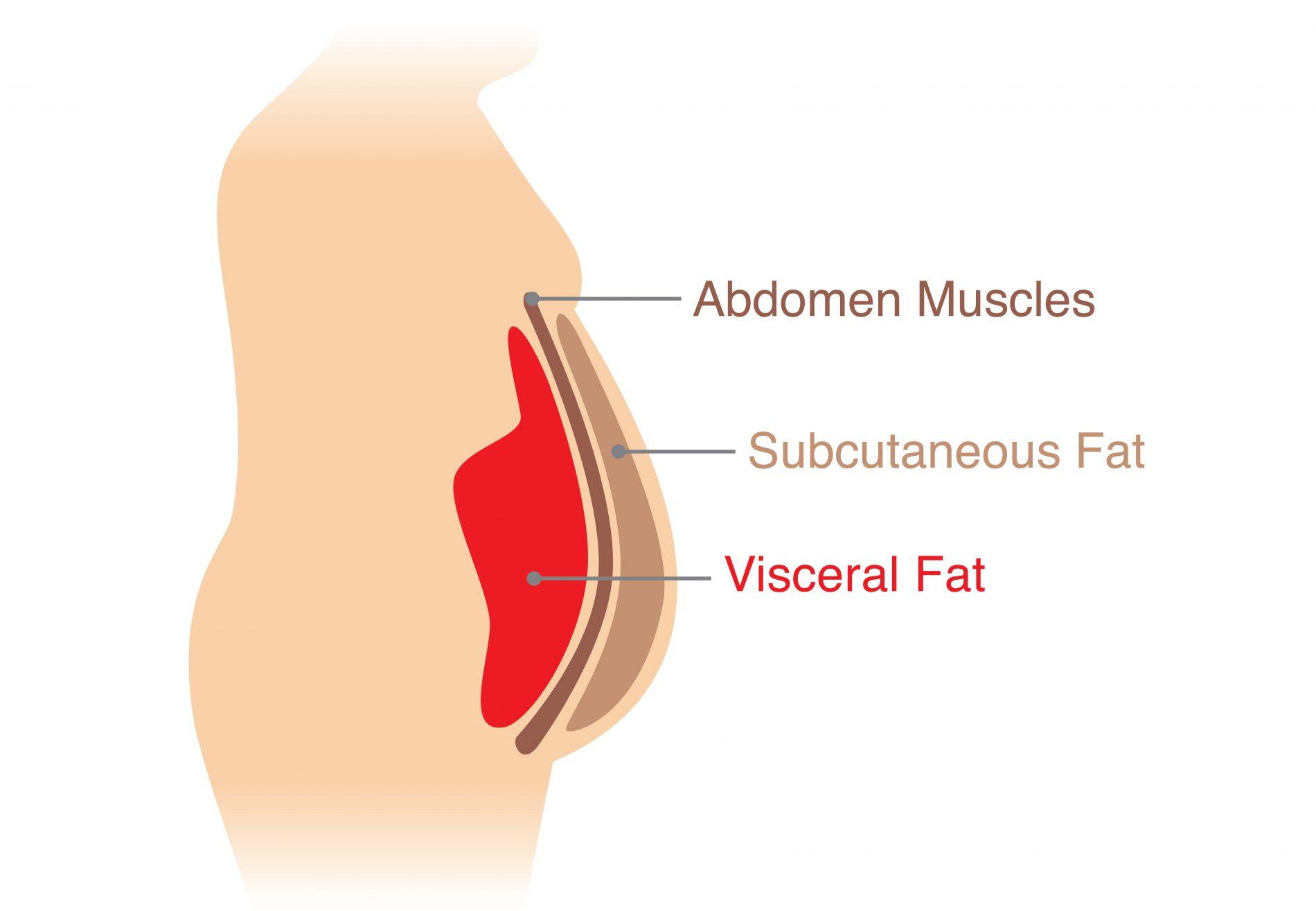 grasso addominale e viscerale, le differenze