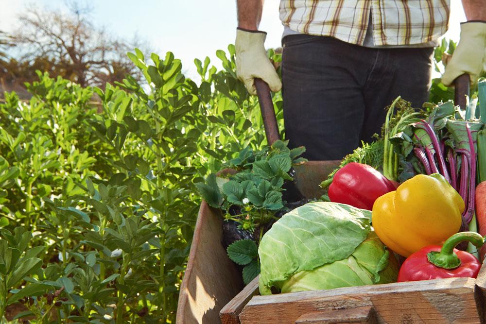 alimentazione biologica agricoltura principi