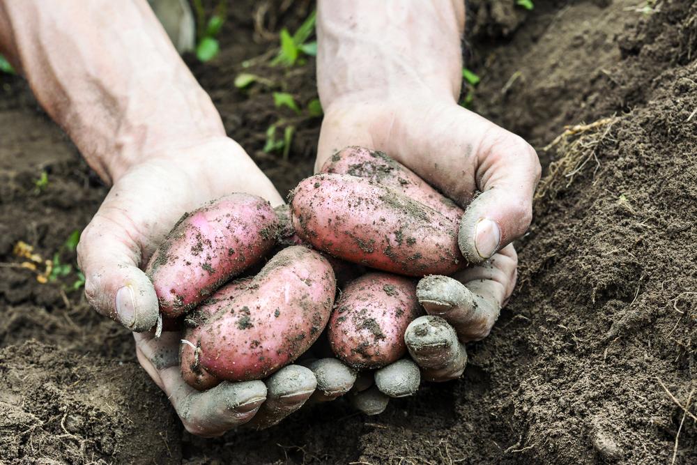 alimentazione biologica normativa europea