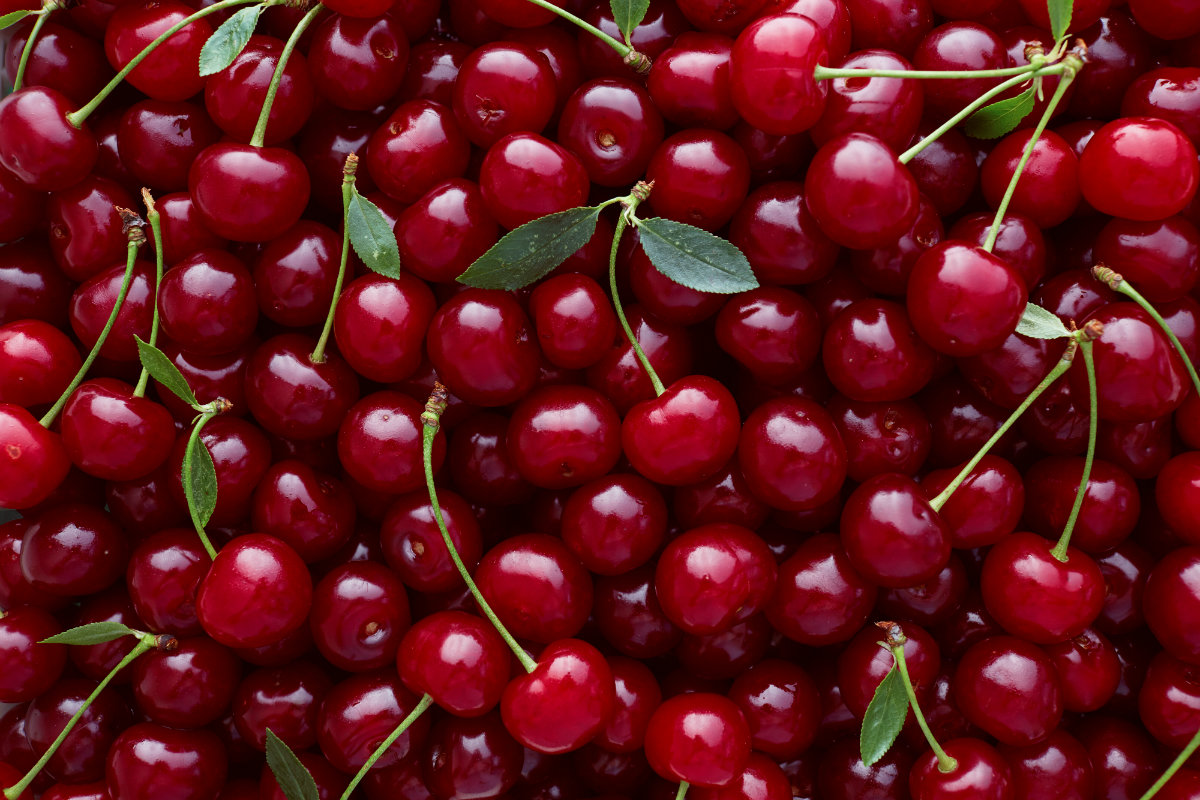 ciliegie: botanica
